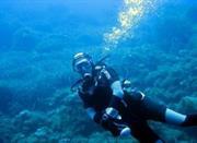 Diving in Pantelleria