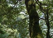 Lago Verde visto da un albero