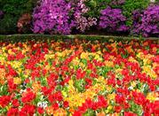 I colori dei Giardini