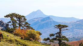 Parco nazionale del Pollino lucano