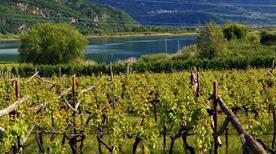 Caldaro sulla strada del vino