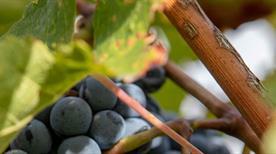 Termeno sulla strada del vino