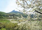 Una gita tra le colline del veronese - Verona