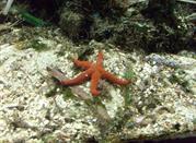 Un acuario muy grande - Genova