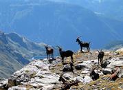Scelta da sempre dagli alpinisti - Valtournenche