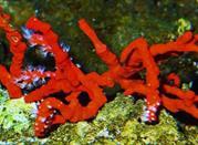 """""""Auf den Spuren Nemos"""": Ein Besuch in dem Aquarium von Genua - Genova"""