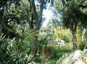 Fatata Forio d'Ischia - Forio