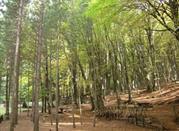 Gambarie, Parco Nazionale dell'Aspromonte, Calabria.  - Gambarie