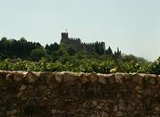 Soave – miasto wina i murów - Soave