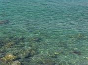 Ricadi ed i suoi protagonisti: i fondali marini - Ricadi