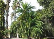 Der Botanische Garten - Palermo