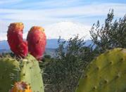 Un frutto esotico sull'Etna: il Fico D'India - Etna