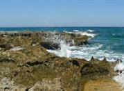 Fasano – morze, termy, zabytki i rozrywka - Fasano