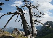 Thermen von Latronico, inmitten des Nationalparkes Pollino - Latronico