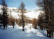 Torgnon, in ihrem herrlichen Tal - Torgnon