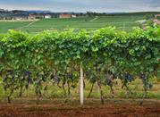 Comida, vino y tradition: Asti - Asti