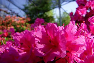 Agriturismo L'Acero Rosso Blumen