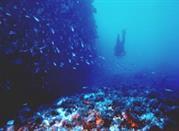 Taormina sea snorkeling and sub - Taormina