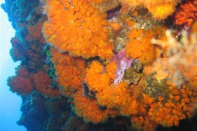 Pantelleria immersioni
