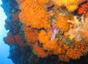 Immersioni nell'isola di Pantelleria - Pantelleria