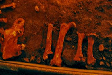 Le ossa dell'orso nella caverna