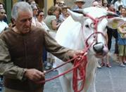 Cosa fare in vacanza a giugno? Calcio in costume – Firenze torna al Rinascimento - Firenze