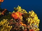 Napoli Solfatare and underwater Park - Napoli