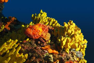 Fish and corals deep in Naples sea