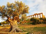 Most beautiful city of the mortals - Agrigento
