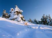 Vacanze sulla neve in Basilicata -