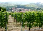 Barolo in Piedmont is the Perfect Rural Italian Holiday Destination for Wine Lovers - Barolo