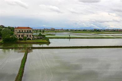 Le risaie di Novara