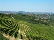 Le Langhe, le dolci colline del turismo enogastronomico - Langhe