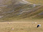 Nel Parco Naturale del Pollino per salire sulle cime dell'Appennino Lucano -