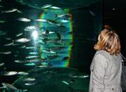 L'acquario di Genova, i segreti svelati degli oceani -
