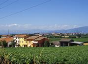 Кастельнуово дель Гарда, гастрономический туризм и вина - Castelnuovo del Garda
