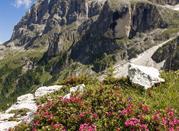 San Martino di Castrozza una conca verdissima - San Martino di Castrozza