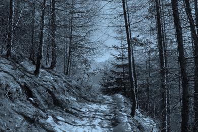 Sentiero nel bosco Prasomaso