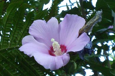 Tropical Flowers in Cadenabbia