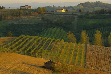 Le colline di vitigni
