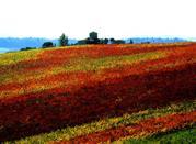 I colori ed i profumi della serenità  - Chianti