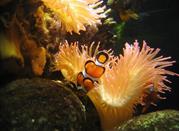 Visita all'acquario di Genova - Genova