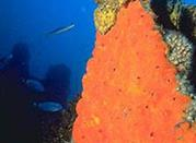 "Para divers: ""Piattaforma Paguro"" - Ravenna"