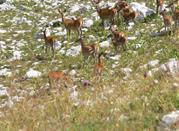 Il Parco Nazionale d'Abruzzo, regno della fauna - Parco Nazionale d'Abruzzo