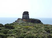 Insel Caprara - Isole Tremiti