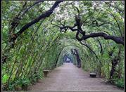 The Boboli Gardens - Firenze