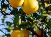 Il Profumo del Bergamotto di Reggio Calabria - Reggio Calabria