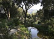 Giardino la Mortella - Forio