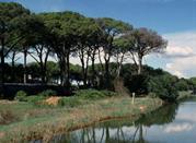 Parco di San Rossore - Pisa