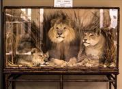 Museo di Zoologia - Bologna